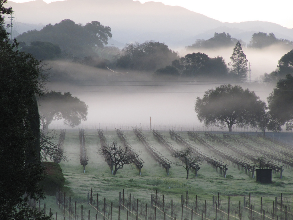 Devastation erupts: Fires consume Napa Valley. Graphic courtesy of Flickr