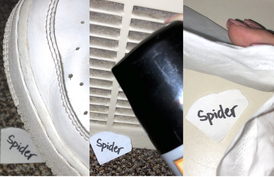 How+to+deal+with+spiders+in+the+dorm