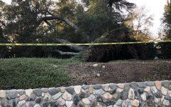 Wild weather obliterates oak tree