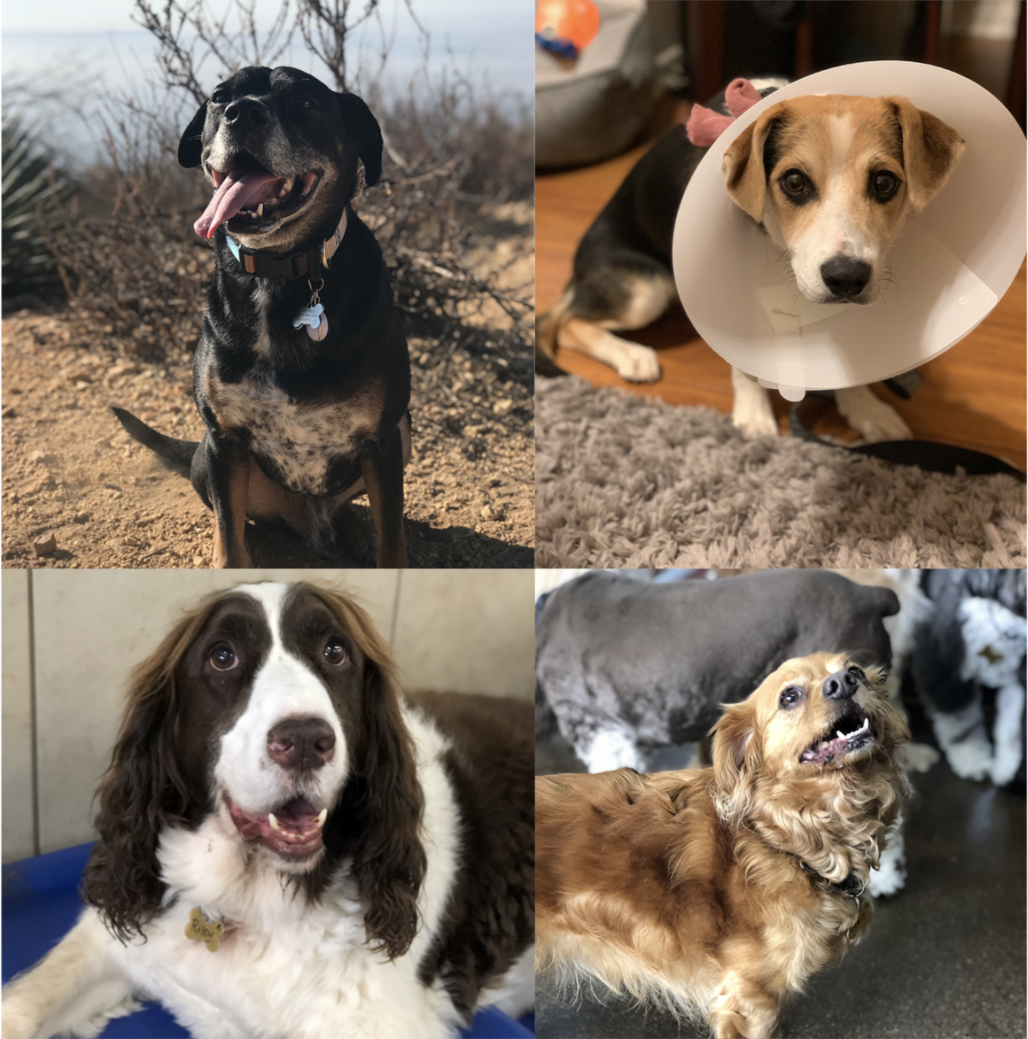 A compilation of Obi, Gus, Riley, and Emmitt.