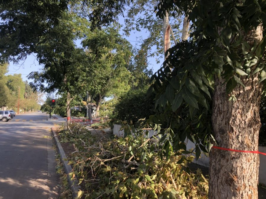 Parts of fallen trees on the corner of West 8th Street and North Indian Hill Boulevard.